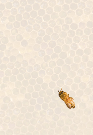 What Beekeeping Taught Me