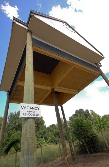 The Bat House At U Of Florida Is Taking Tenants Photo