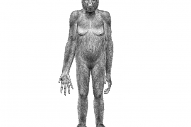 an introduction to how tools transformed proto humans into modern humans By 115,000 years ago, early modern humans had expanded their range to south africa and into southwest asia (israel) shortly after 100,000 years ago there is no reliable evidence of modern humans elsewhere in the old world until 60,000-40,000 years ago, during a short temperate period in the midst of the last ice age.