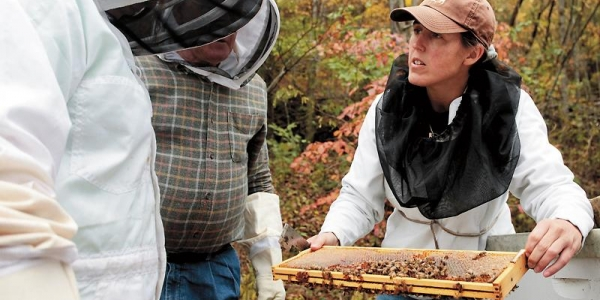 In Appalachia, a Researcher Makes Honey From Coal 1