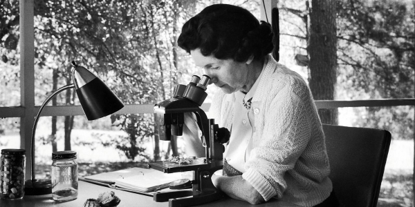 Silent Springs by Rachel Carson Review | We Are A Leading Online Essay ...