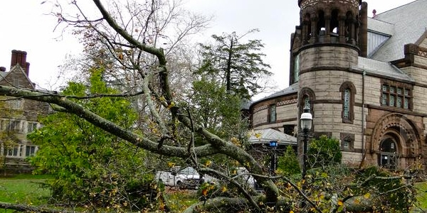Trees down at Princeton after Hurricane Sandy