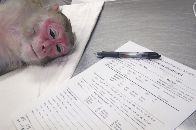 Primate culture essay